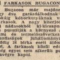 Farkasok Bugacon - Népszava 1964 szeptember 9.