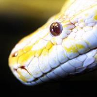 Kígyót a nyakadba!-fényképezkedés rendezvényeken