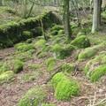 Kirándulás Észak-Írországban, Rostrevor Forest Park