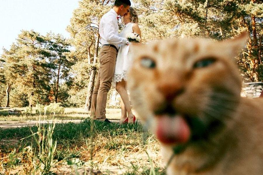 A macska félreérthetetlenül kifejezte a véleményét a látottakkal kapcsolatban.