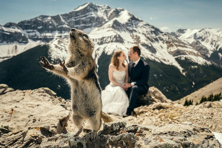 A mókus drámai közbelépése egy romantikus filmbe is beillene.