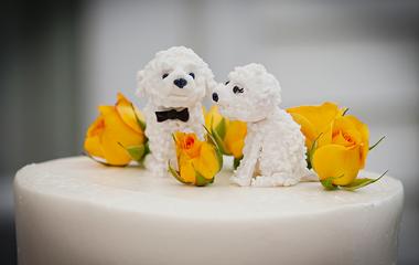 Cuki kutya kukucskál ki a tortából: ettől az ötlettől mindenki elolvadt az esküvőn