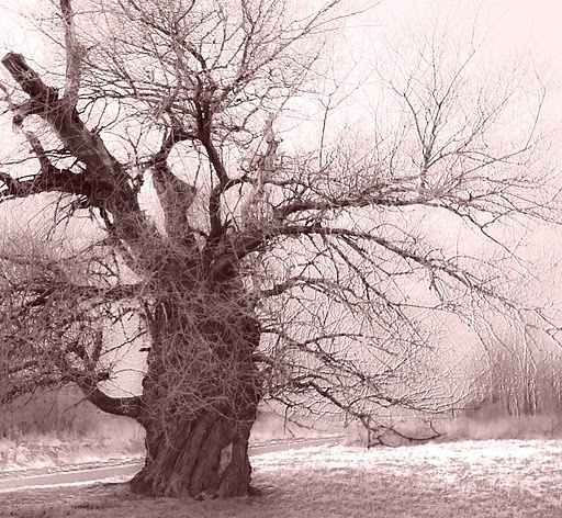 nagyszederfa.jpg