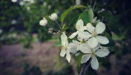 Tavaszi virulás