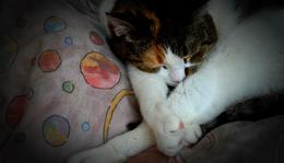 Pihepuha pihenés