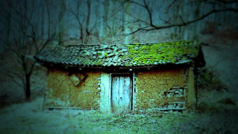 woods-2138234_960_720_fotor.jpg
