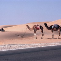 Egyesült Arab Emírségek - 1981