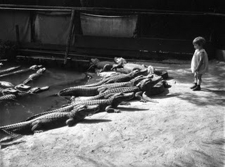 los_angeles_alligator_farm_1920s_03.jpg