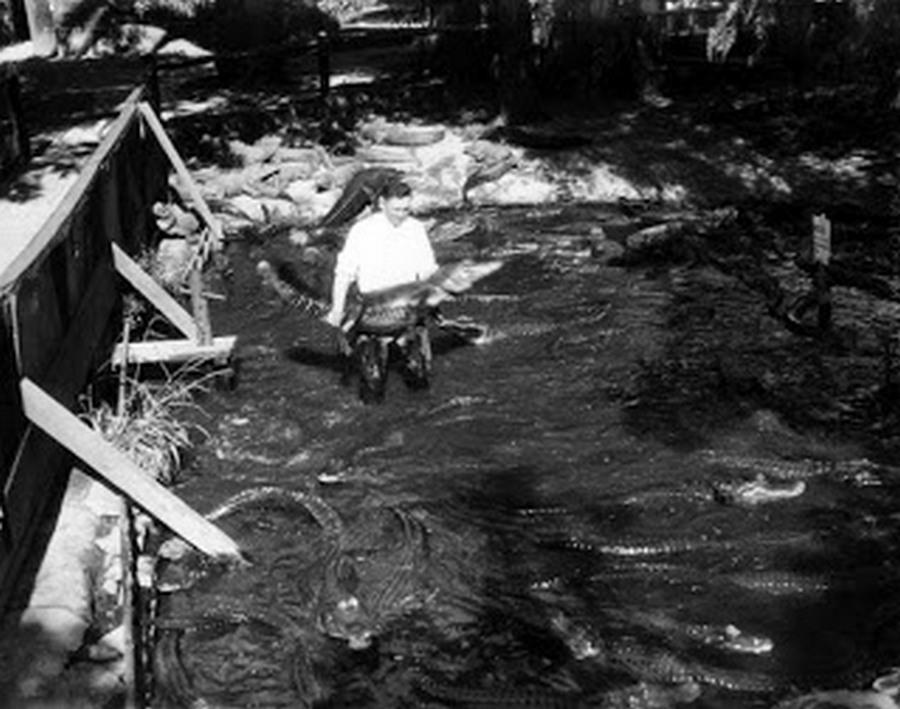 los_angeles_alligator_farm_1920s_13.jpg