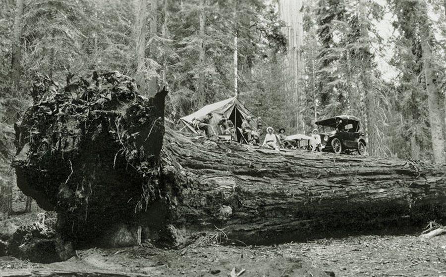 1917_amerikai_csalad_piknikezik_egy_kidolt_orias_sequoia_mamutfenyon.jpg