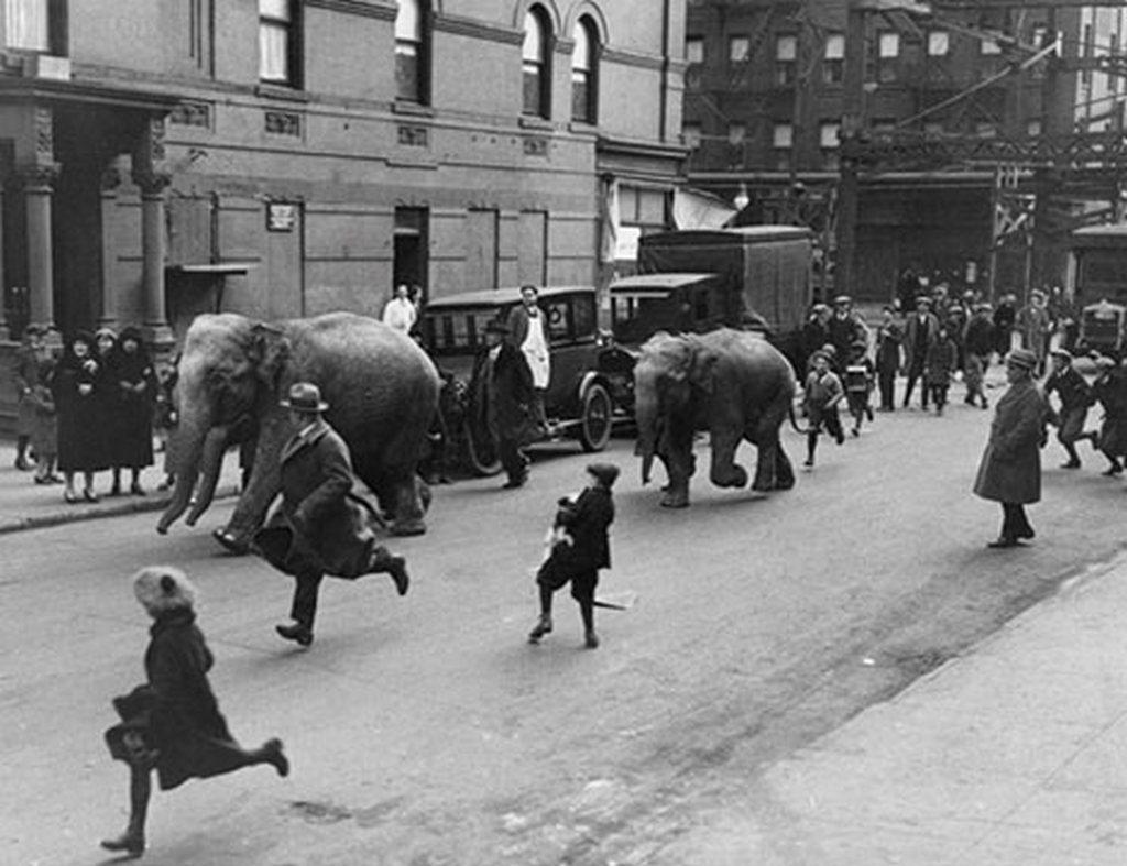 1930_harom_elefant_szalad_a_new_york-i_125-ik_utcan_miutan_megleptek_a_loew_s_victoria_szinhazbol_a_harlemben.jpg