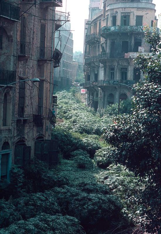 1982_a_bejruti_green_line_zold_vonal_demarkacios_zona_a_lakatlanna_valt_terulet_1975-tol_1990-ig_valasztotta_kette_a_varos_kereszteny_es_muszlim_reszet_nevet_az_elburjanzo_novenyzetrol_kapta.jpg