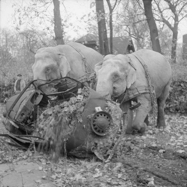 1945_hamburgi_cirkuszi_elefantok_segitenek_a_romeltakaritasban.jpg