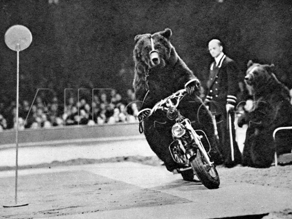 1951_motorozo_barnamedve_a_brit_bertram_mills_circus_londoni_eloadasan.jpg