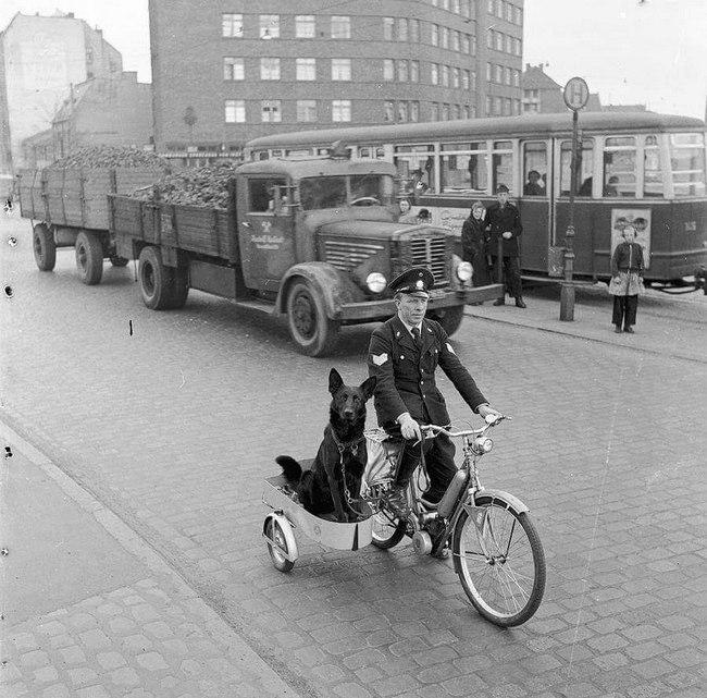1955_nszk_hamburg_ormester_ernst_muller_es_kutyaja_megy_a_kihivas.jpeg