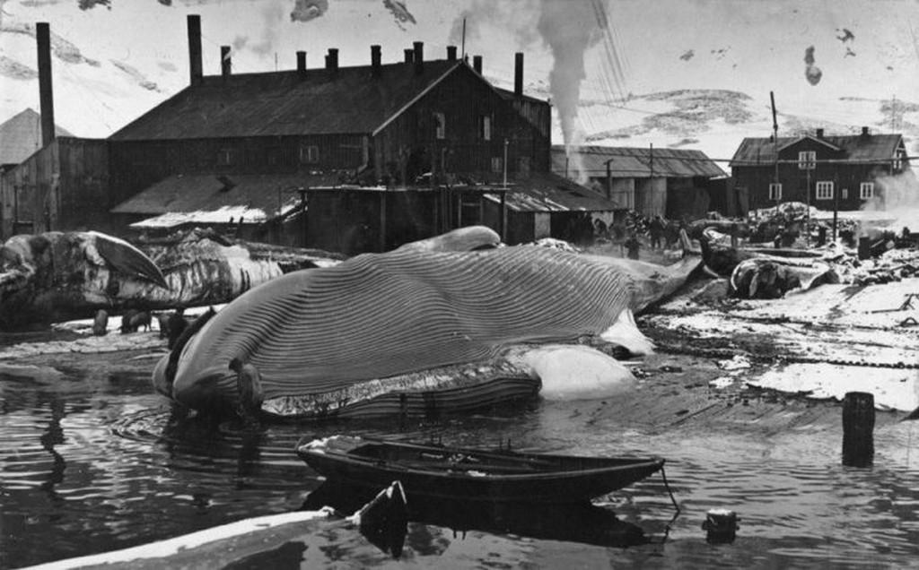 1917_balnavadasz_telep_a_del-georgia_szigeten_az_antarktisz_kozeleben.jpg