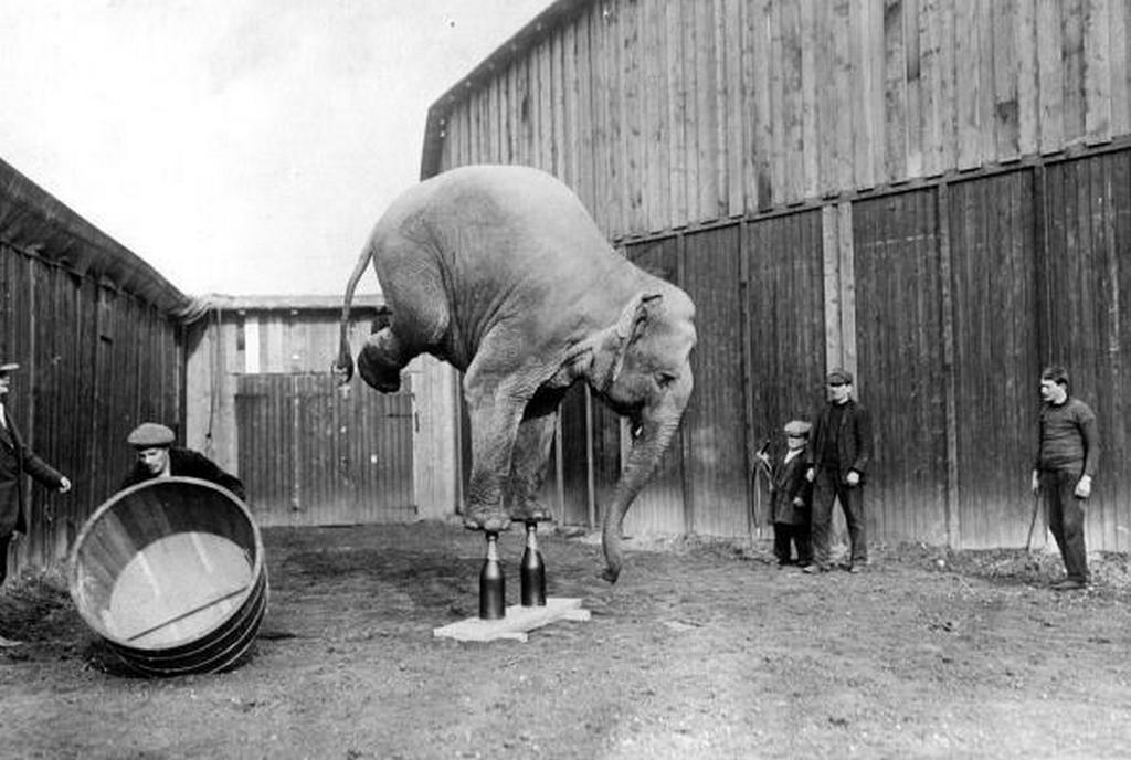 1920_cirkuszi_elefant_mellso_labain_allva_egynsulyoz_ket_pezsgosuvegen.jpg