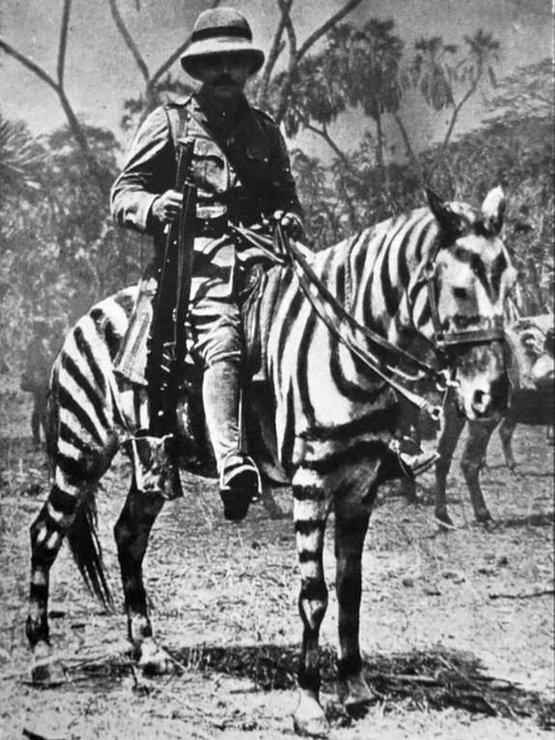 1916_british_soldier_on_a_horse_in_zebra_camouflage_german_east_africa_during_wwi.jpg