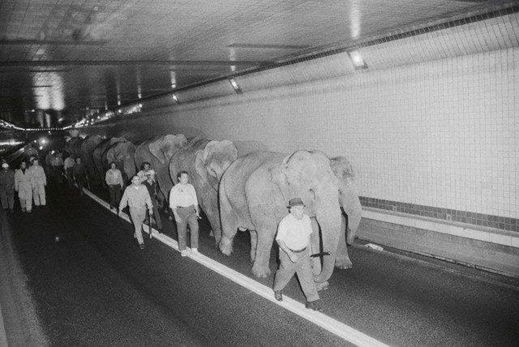 1971_circus_elephants_walking_through_the_lincoln_tunnel_in_new_york_city2.jpg