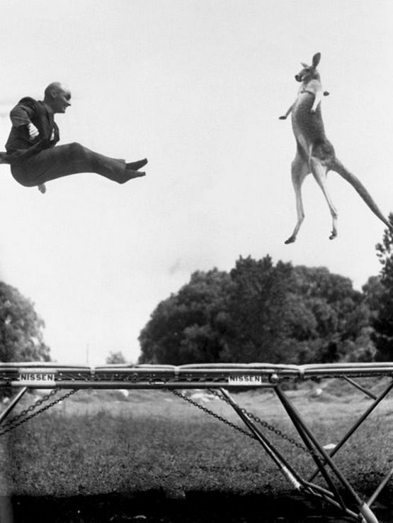 1960_george_nissen_inventor_of_the_trampoline_jumping_with_his_kangaroo.jpg