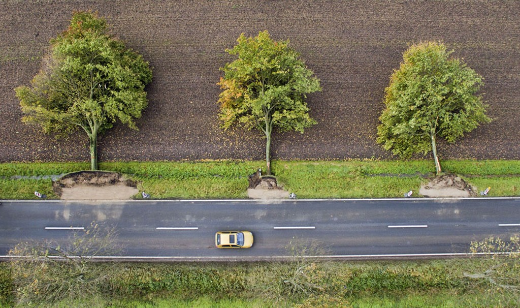 2017_10_06_three_uprooted_trees_along_a_road_near_hildesheim_germany_on_october_6.jpg