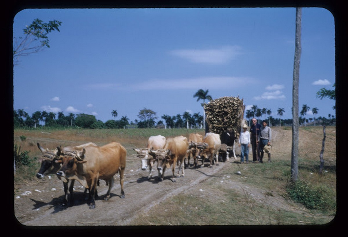 everyday_life_of_cuba_in_the_1950s_2816_29.jpg