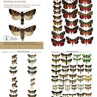 Megjelent: A MAGYARORSZÁGI BAGOLYLEPKÉK (Lepidoptera, Noctuidae) FÉNYKÉPES HATÁROZÓJA