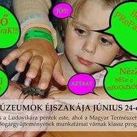 Múzeumok Éjszakája a Magyar Természettudományi Múzeumban: Preparálj bogarat!!