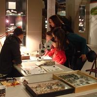 MŰHELYTITKOK - Kérdezd a muzeológusokat a munkájukról! Március 10-én – György Zoltán és Németh Tamás: Bogarak a világ minden tájáról