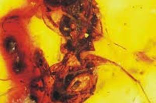 A méhek evolúciós eredete és a poszméhek változatos világa