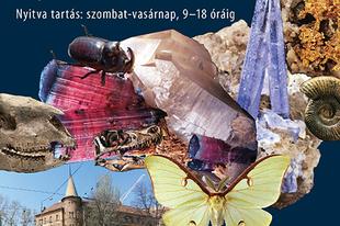 A Magyar Vese-társaság részére rendezett rovar-, ásvány- és őslénybörze lesz május 28-29-én