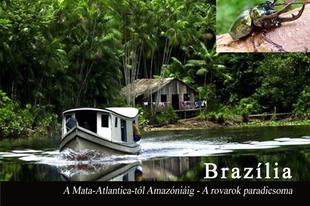A Mata-Atlanticá-tól az Amazóniáig - A rovarok paradicsoma
