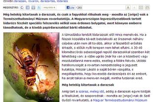 Molnár Orsolya (Origo): Minél tovább tart a meleg, annál több lesz a darázs