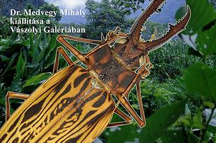 Vászolyi Nyár: A trópusi köderdők rovarcsodái (dr. Medvegy Mihály kiállítása)