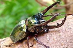 Szentlőrinci Gazdanapok rovarokkal