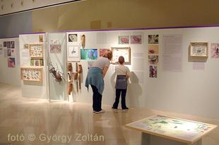 Magyar Természettudományi Múzeum: Hatlábúak birodalma rovarkiállítás 23. kép