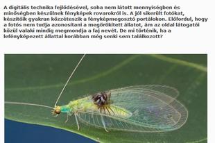Két rovaros írás a National Geographic honlapon