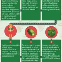 Hogyan válaszd ki a legédesebb dinnyét? (Infografika)