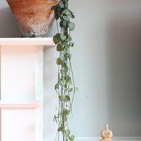 5 szobanövény, amire évek óta vágyom