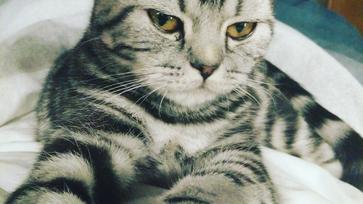 Cica vagy lakberendezési mánia?