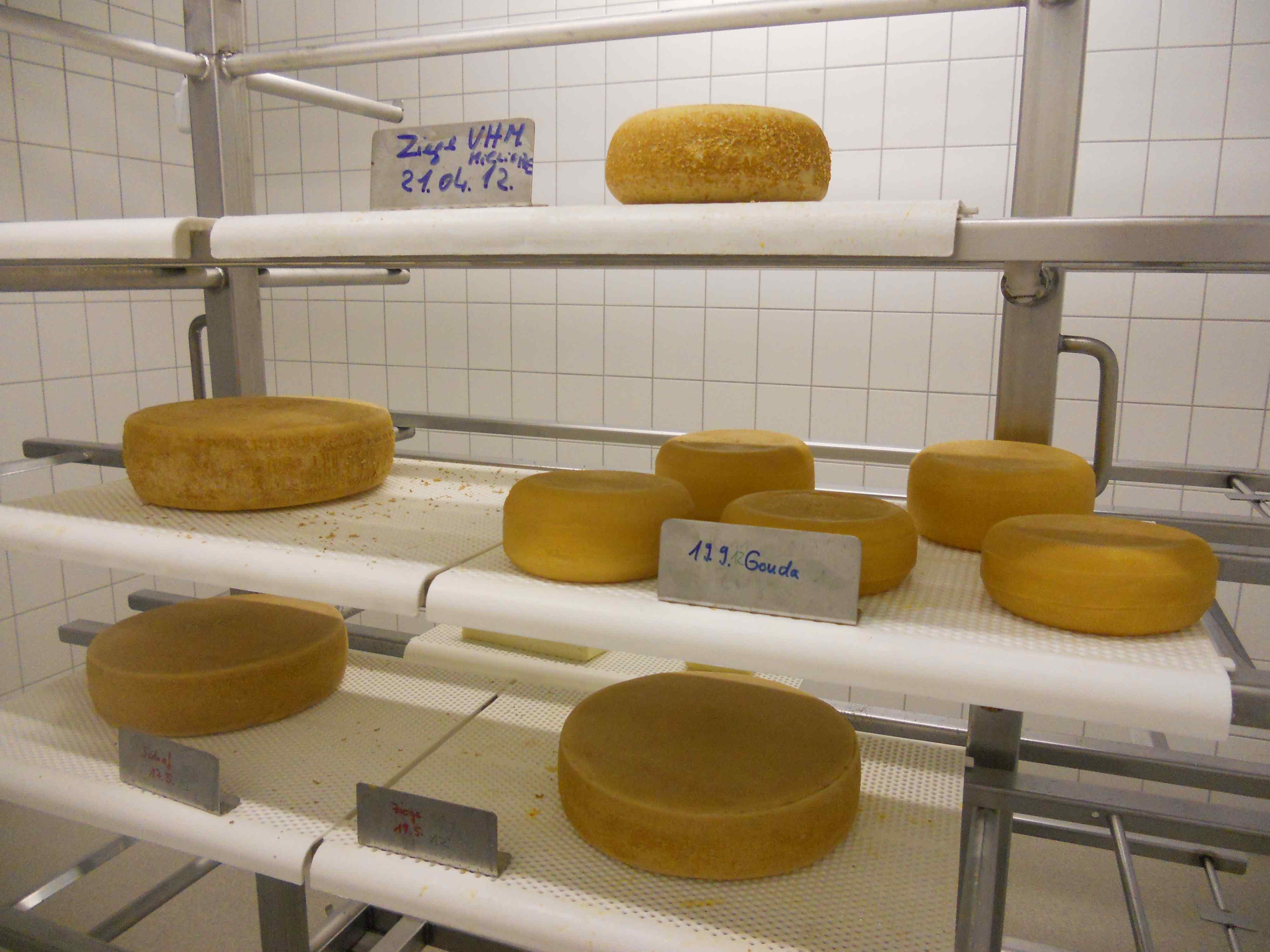 hohenheimi kísérleti sajtok