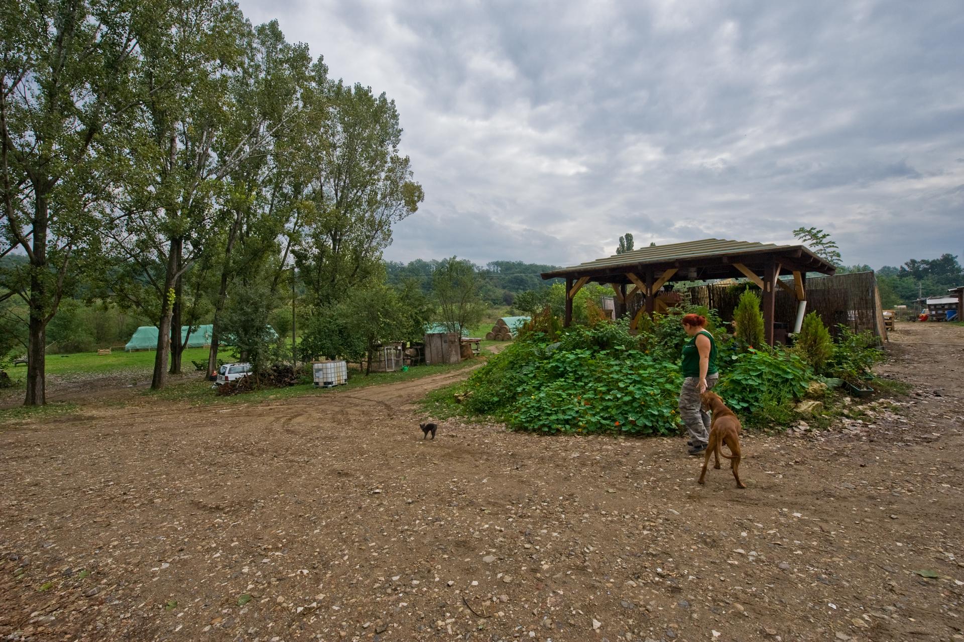 Pillanatkép a tanyáról a sarkantyúka bokornál
