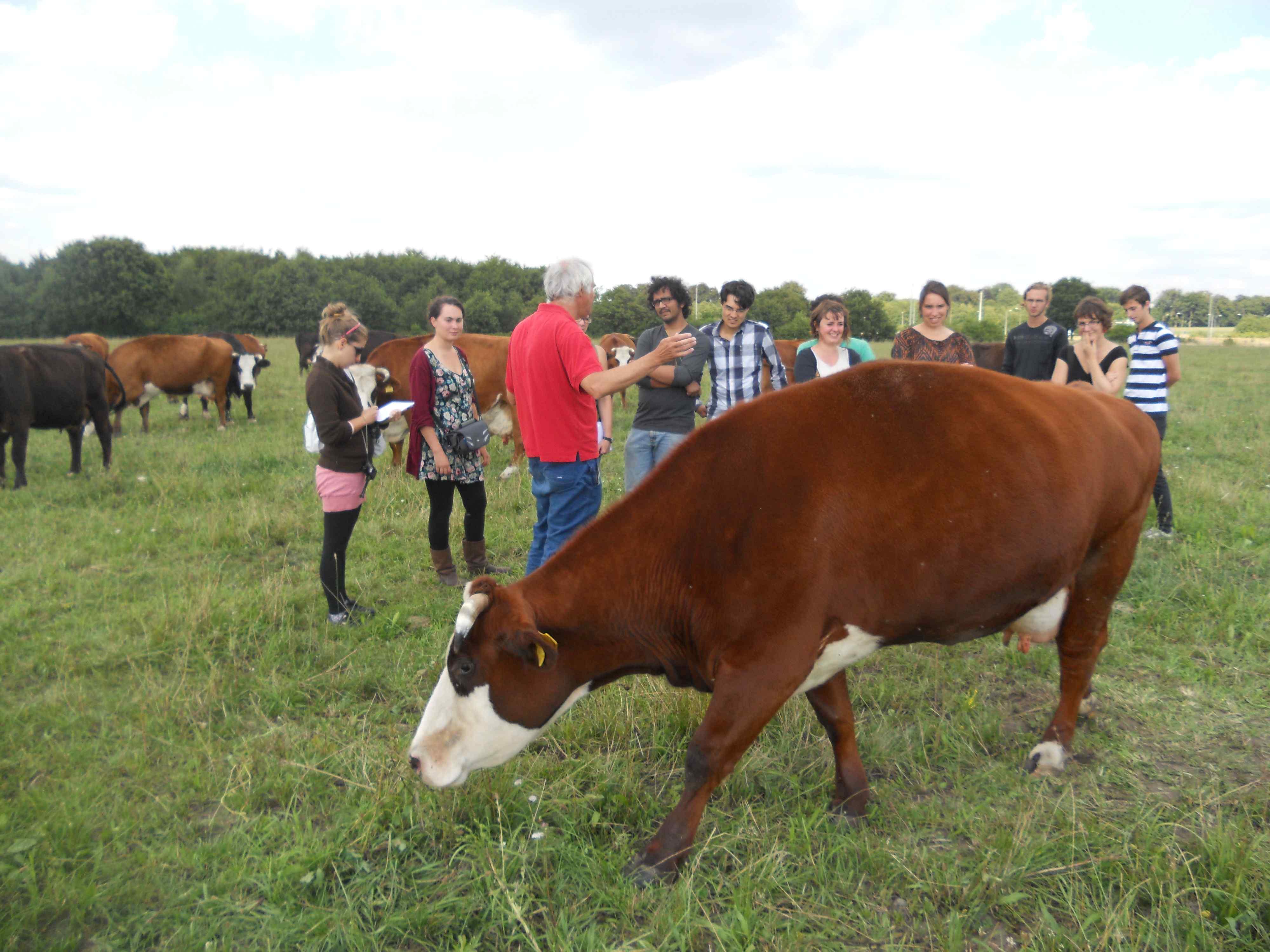 CSA bio tehén farm - oktatás egy wageningeni professzortól