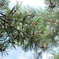 Kolbenheyer ír 137.: A természet lágy öle