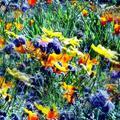 Botond meséi - Égből pottyant színek