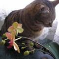 Ki a virágot szereti...