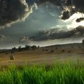 Eső előtt is nő a fű....