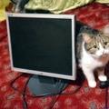 A grafikus és a monitordealer a laptopszervizben