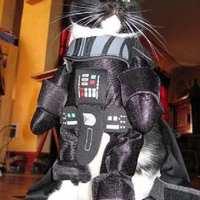 A hónap videója: Star Wars: The Cat Unleashed, avagy a Kandúr igenis működik