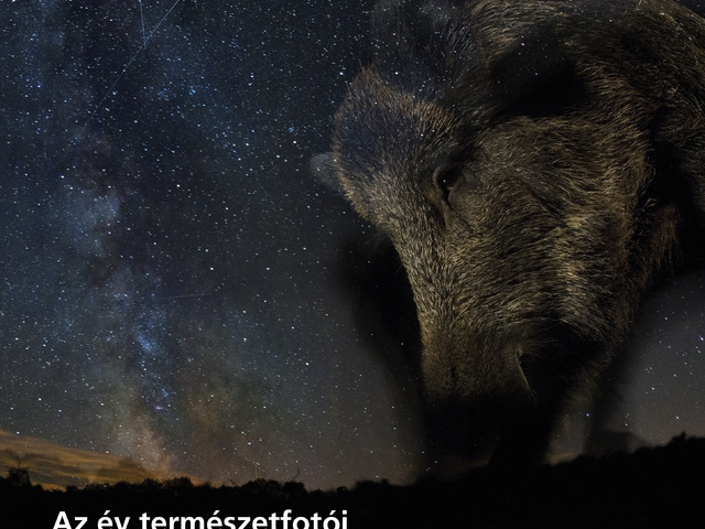 Kiállításajánló: Az Év Természetfotósa 2015 - jövőhéten nyílik!